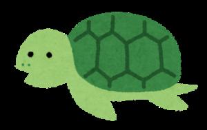 緑の甲羅の亀