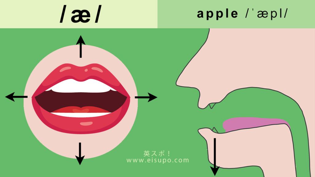 正しい/æ/の発音方法
