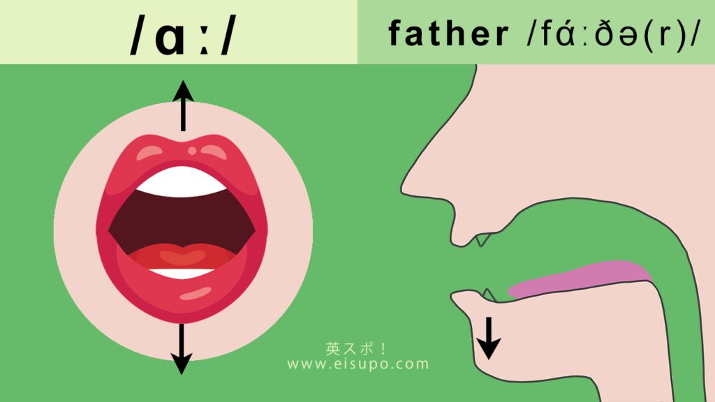 正しい/ɑː/の発音方法の図