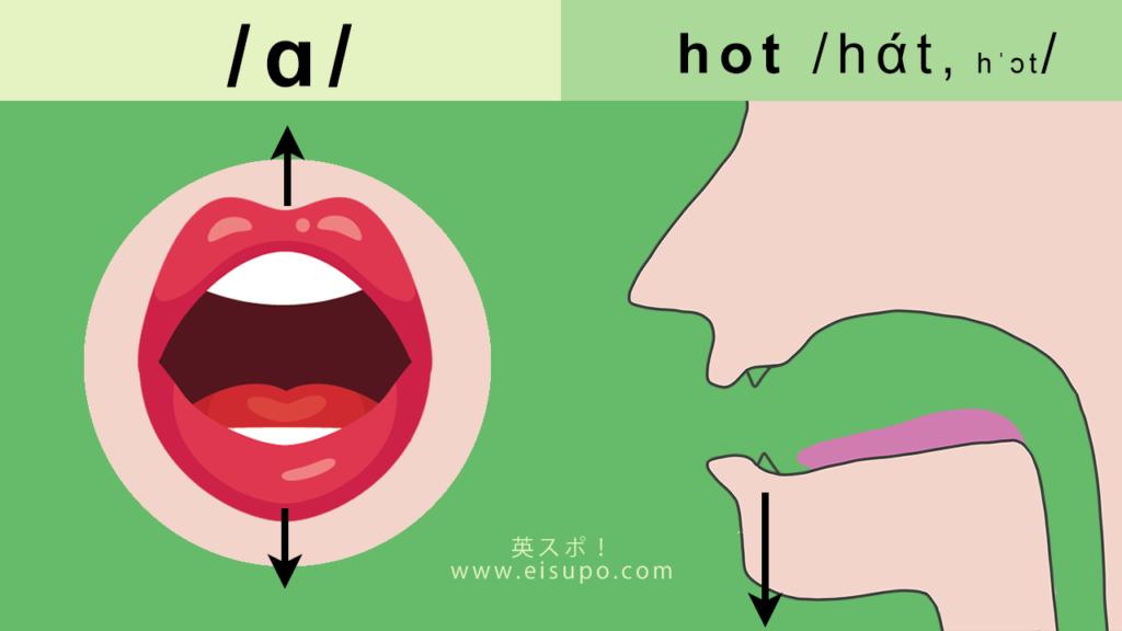 正しい/ɑ/の発音方法の図