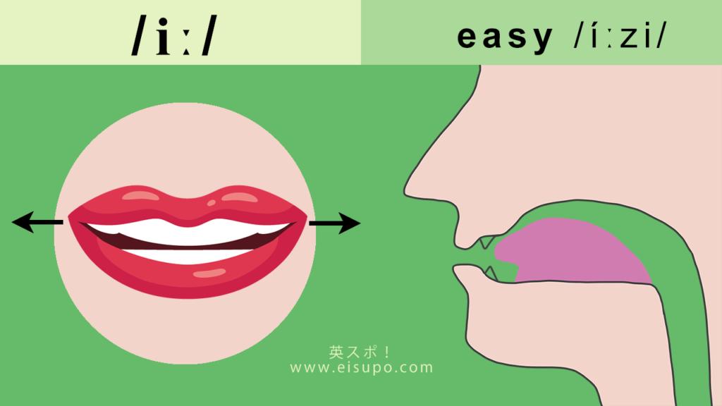 英語のiː i:/iː/の正しい発音方法の図