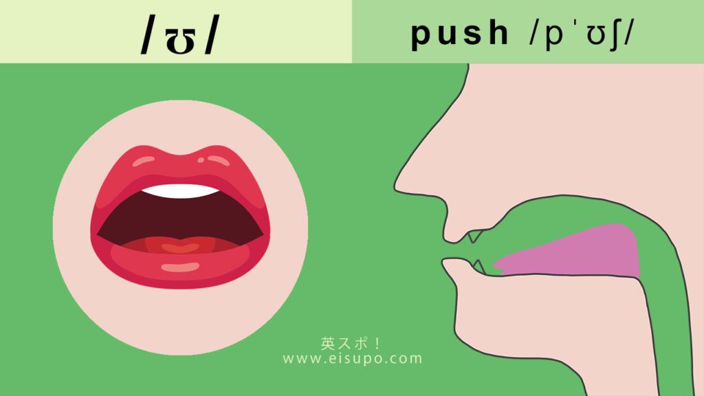 英語の/u/の正しい発音方法