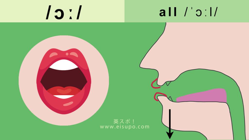 英語の/ɔː/の正しい発音の仕方