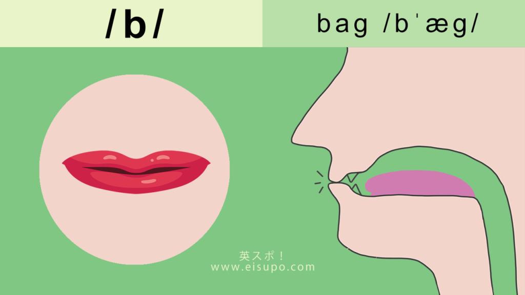 英語の発音方法:/b/ の正しい発音の仕方