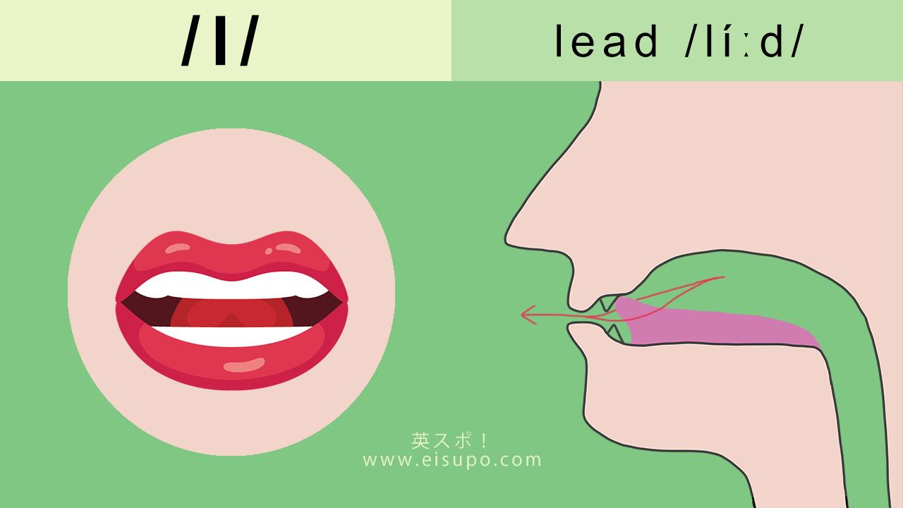 英語の発音方法:/l/ の正しい発音の仕方