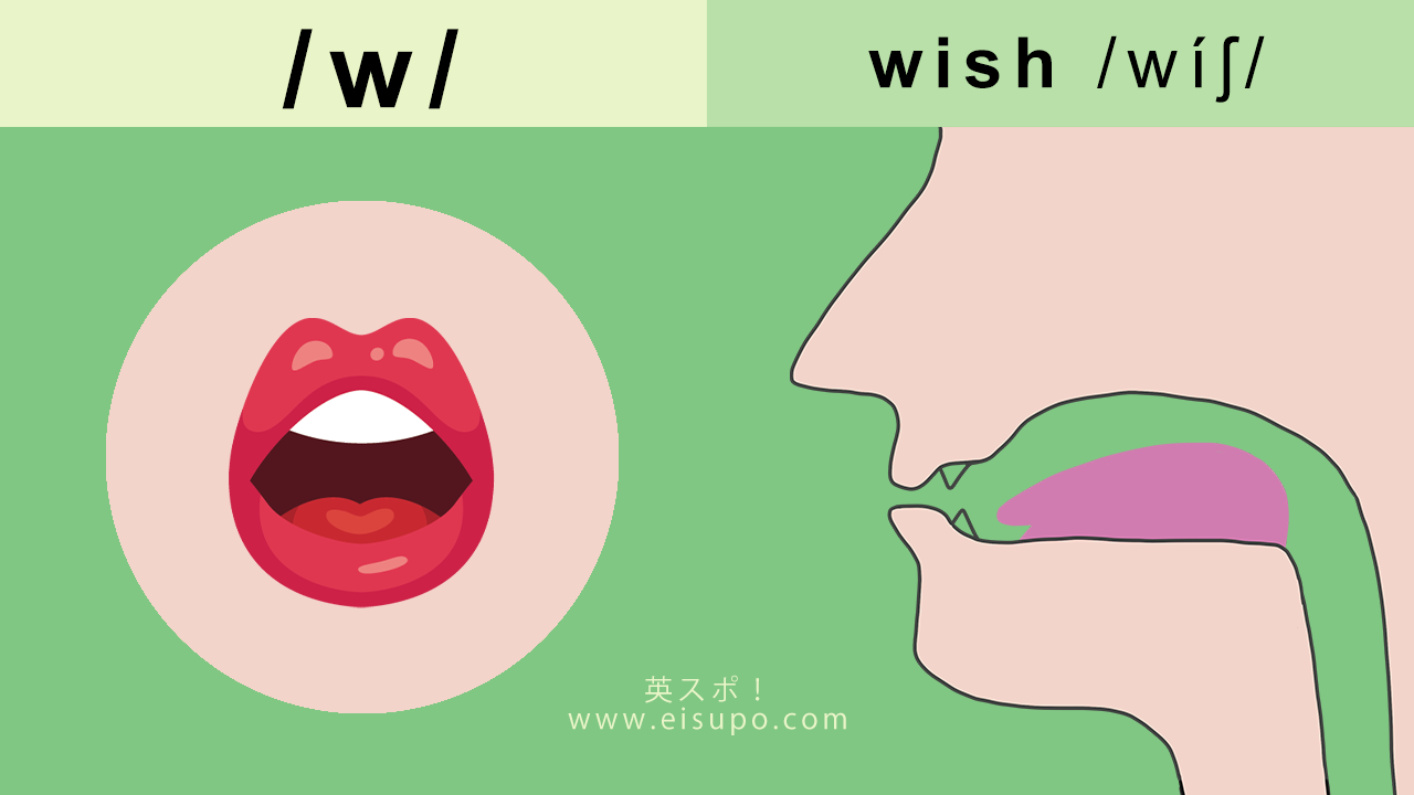 英語の発音方法:/w/ の正しい発音の仕方
