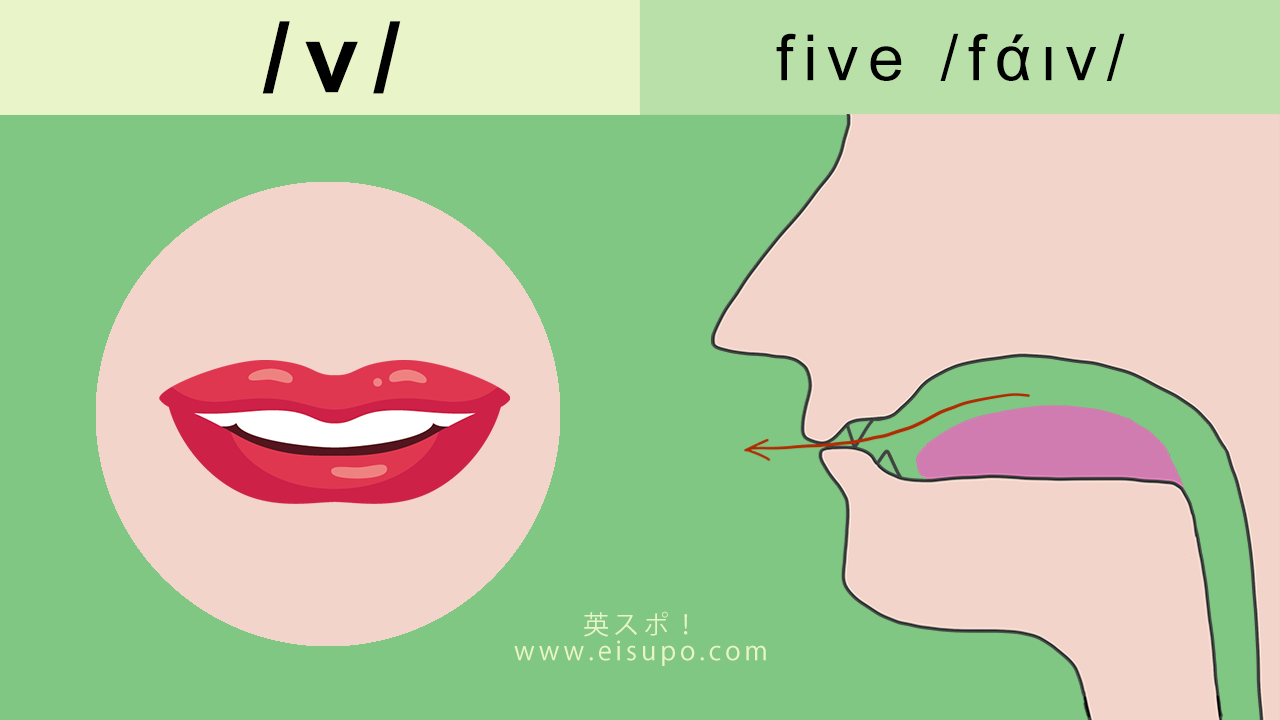 英語の発音方法 摩擦音 v
