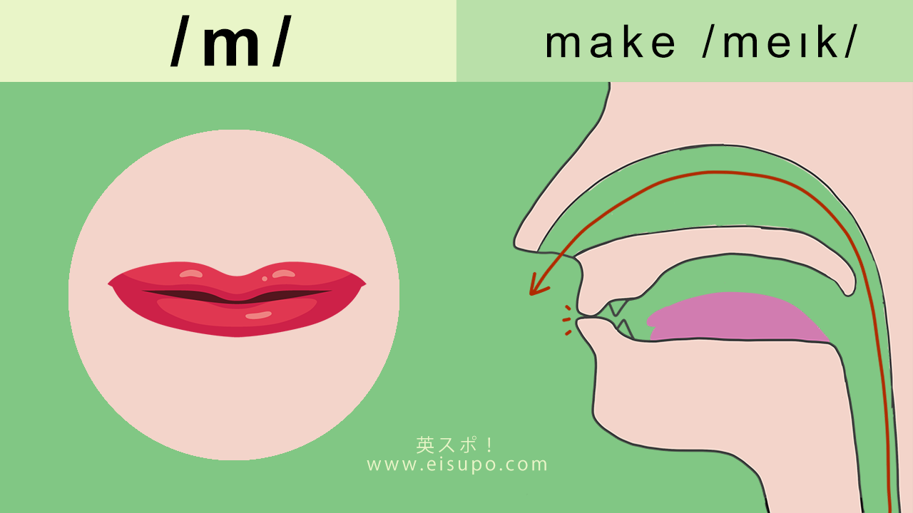 英語/m/ の正しい発音の方法と仕方